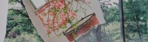 cropped-botanic-journal-may-4-002.jpg